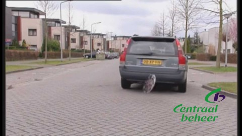 Verschillende Newsclippers, korte videoboodschappen. https://www.centraalbeheer.nl/Paginas/default.aspx